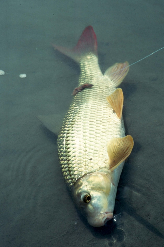First Casts of the Season are at a River Near You - Fishing
