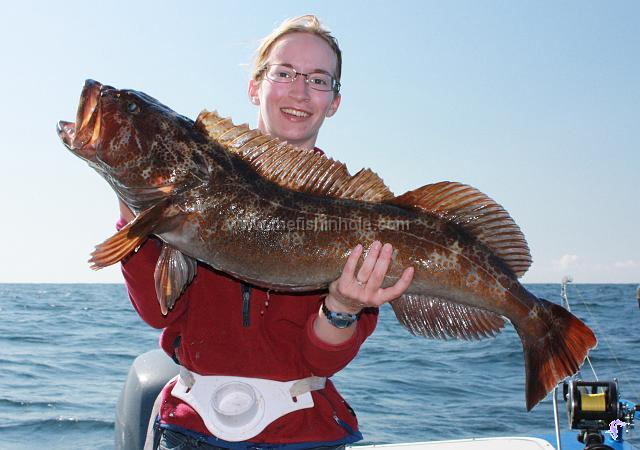 To catch a big halibut or ling cod fishing article by for New zealand ling fish