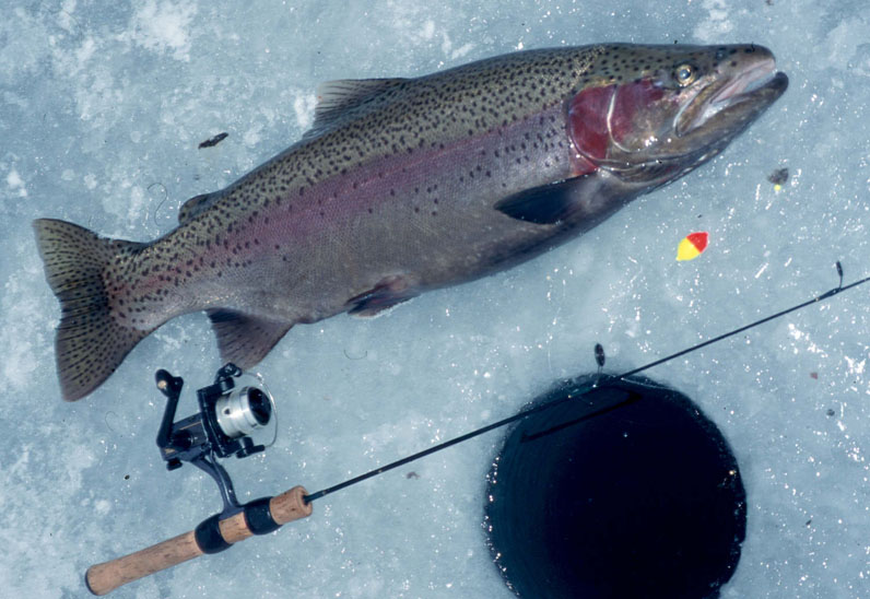 catching rainbows through the ice - fishing tips|the fishin' hole, Fly Fishing Bait
