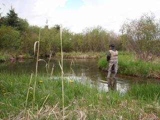 Using the right approach can help you solve the riddle of spooky trout in small streams