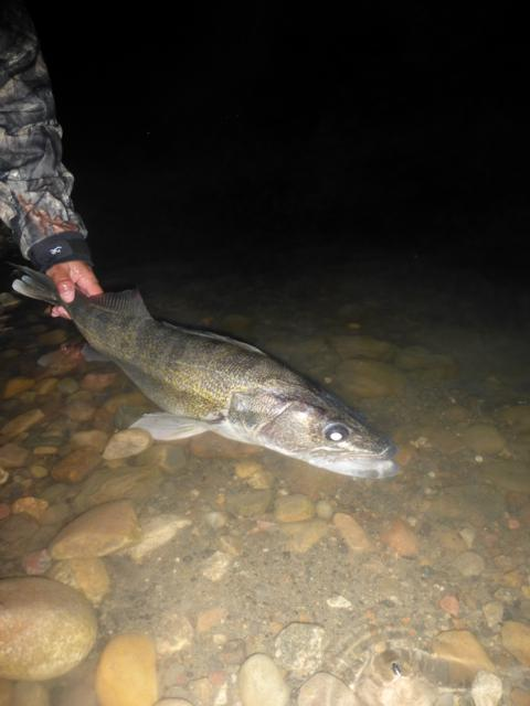 River fishing for fall walleye fishing article by the for Fall walleye fishing