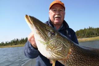 Northwest Territories Pike