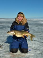 Cold Lake, Lake Trout
