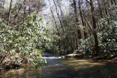 Noontoola Creek, a Blue Ridge Mountains classic