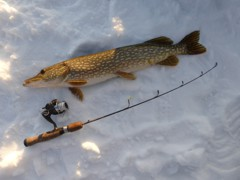 A heavy pike, and a bonus catch, as it crushed a small jig intended for perch