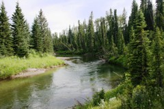 Prairie Creek - one of central Alberta's iconic brown trout streams