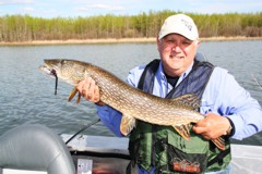 Trophy size pike in Wabamun Lake Alberta