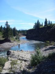 growing demand trout streams fly fishing alberta