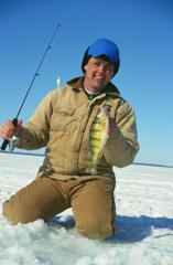 Yellow Perch caught on strong opaque ice
