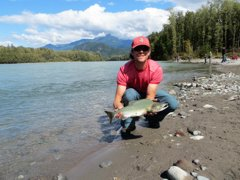 BC's banner years for pink salmon