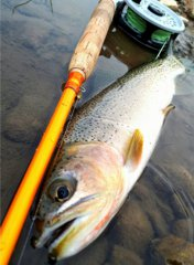 Fiberglass rods can fight and land big trout