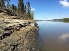 The lazy lower Athabasca River is prime goldeye habitat