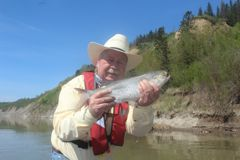 North Saskatchewan River goldeye