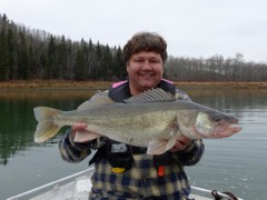 It's not everyday you crank a walleye over 10 pounds, but in the fall this happens much more often.