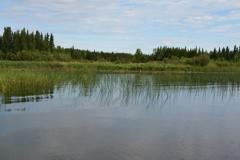 Bays with a combination of emergent and submergent vegetation proved to hold the largest pike.