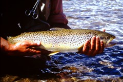 Fishing the Wind and Bull Rivers on the Wind River Indian Reservation in Wyoming