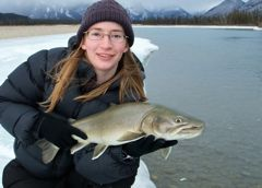 The potential for mega bull trout on the Athabasca River is very real.