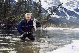The Bow River is one of Alberta's premier winter fisheries. This mountain whitefish was caught on an open water section near Canmore